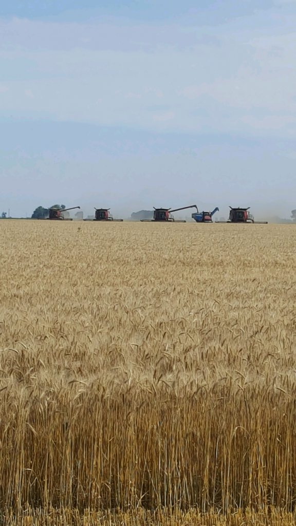 Mill Farms photograph